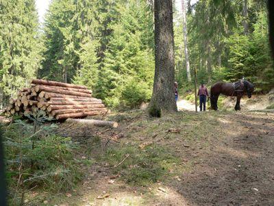 Früher wurde das Holz noch mit Hilfe von Pferden bearbeitet, was jedoch heutzutage der Harvester bzw. andere moderne Maschinen erledigen.